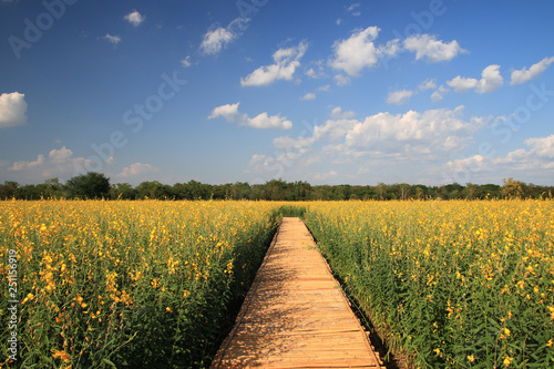 Bamboo bridge in the flower field - 251156919