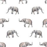Watercolor elephant seamless vector pattern - 251197951
