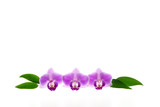 Three purple orchid blossoms and green leaves isolated on white background - plenty of text space
