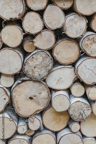 vertical orientation of sawed ends of a pile of white birch fire wood - 251242777