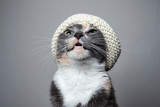 Young cute cat, in a fashionable knitted hat, raised her head up and meows.