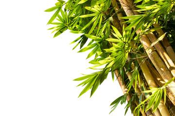 Bamboo trees isolated on white background © amstockphoto