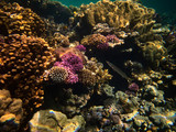 close up underwater photo of coral reefs in red sea