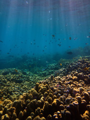 underwater photo of fishes group swimming at coral reefs in red sea