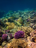 Beautiful colorful underwater photo of coral reefs in red sea