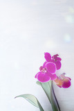 pink orchid on a light gray blurred background  banner. Copy space