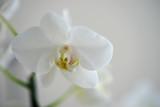 fleur d'orchidée blanche sur branche