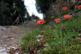 Blumenpfad nach Campo di Brenzone