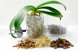 Transplant plants. Transplant orchids. Home gardening, breeding of orchids.