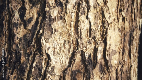 Image Of Texture A Tree Trunk