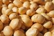 Kartoffeln Erdäpfel