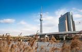 Tokyo, Japan: February 20, 2018: Tokyo Skytree white blue sky