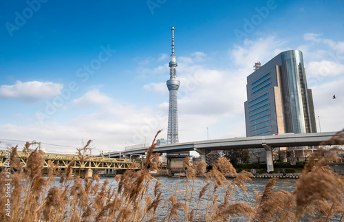 obraz lub plakat Tokyo, Japan: February 20, 2018: Tokyo Skytree white blue sky