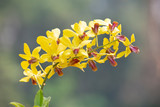 Beautiful orchid flower in nature with blurred background.