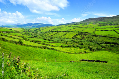 obraz PCV Hills of green rural fields in the countryside of Ireland. Dingle peninsula, County Kerry.