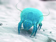 3d rendered illustration of a house dust mite - 251440972