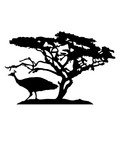 afrika baum savanne vogel silhouette umriss schatten pfau fasan federn groß männlich schön hübsch augen zoo wildtier comic cartoon clipart design