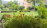 Sommer, Blumen in der Stadt