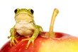 Green tree frog sitting on red apple - isolated