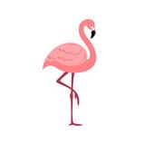 Flamingos in flat style on white background.