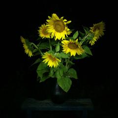 Sunflower bouquet at night