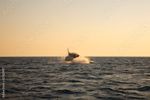 Australia whale in queensland whitsundays - 251629157