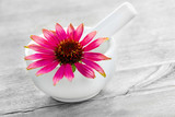 Echinacea blossoms and mortar