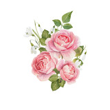 Watercolor rose vector omposition - 251804130