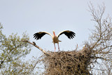 image of a stork on a nest