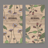 Set of two labels with Bellis perennis aka daisy and Atropa belladonna aka belladonna color sketch.