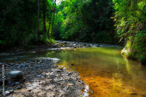Foto Murales river in forest