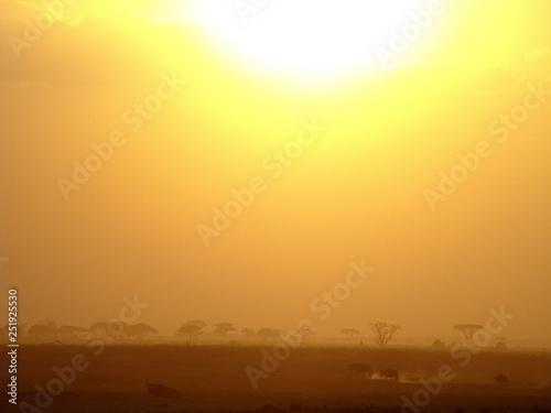 obraz PCV Safari, kenia, sunset