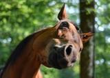 Fototapeta Konie - The animal world of the globe is large and diverse © Julia
