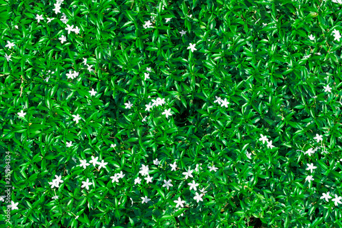 little white flower on dark green shiny glitter grass background, frame texture background for garden, beautiful green shimmer glittering texture background - 251984324