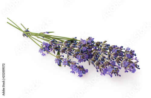 Bundle of lavender isolated on white background. - 252009372