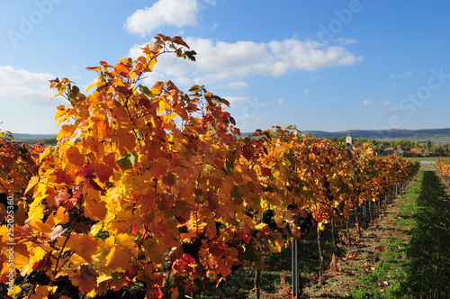 mata magnetyczna wineyard near retz, weinviertel, lower austria