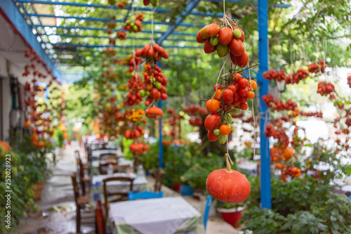 GREECE, CRETE, AUGUST 2018: Interior of one of the roadside cafe in Crete. Tomatoes garter on the ropes