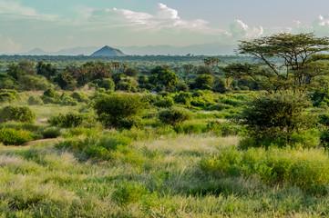 View of the trails and savannah of Samburu