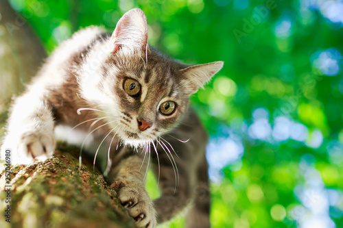 portrait of a beautiful cute striped the cat sits high on a bright green tree trunk in a sunny spring garden and looks down