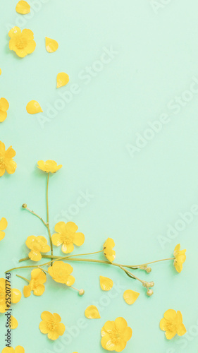yellow buttercups on green paper background - 252077743