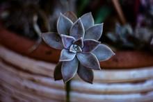 "Постер, картина, фотообои ""juicy plant in a pot"""