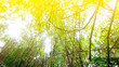 Leinwanddruck Bild - Rainforest in Southeast Asia, Thailand. Sun glare. Lush jungle. Exotic leaves.
