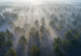 Fototapeta Na ścianę - Aerial shot of foggy forest at sunrise. Flying over pine trees early in the morning. © silver-john