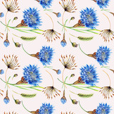 Seamless pattern with cornflower and floral elements on a white background in watercolor.