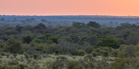 African Savanna plain evening overview