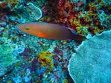 poisson de récif