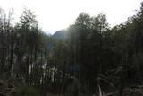 Fototapeta Na ścianę - Patagonia, Chile, sur, austral, lago verde, carretera austral, bosque, nativo, autóctono, campo, viaje, vacaciones, descanso, naturaleza. © pamelagarrido