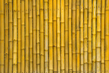 Yellow bamboo wall for background © MrPreecha