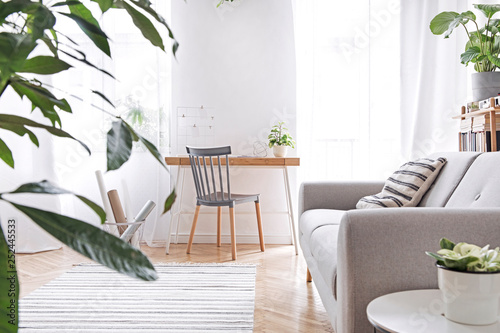 Leinwanddruck Bild Modern scandinavian living room with design furniture, grey sofa, plants, bamboo bookstand and wooden desk. Brown wooden parquet. Nice apartment. Stylish decor. Bright and sunny side of home space.