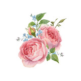 Watercolor rose vector omposition - 252476127